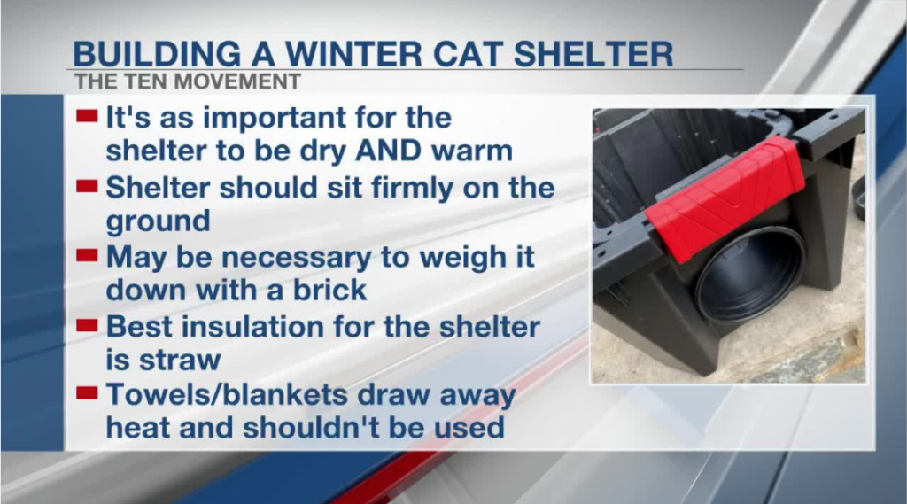 Fox19 shares how to make a winter shelter for community cats