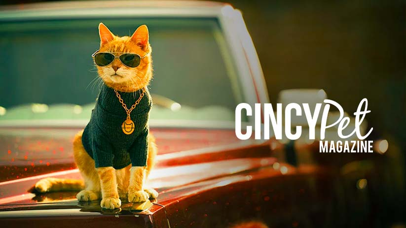 Scooter the Neutered Cat Gives Exclusive Interview to CincyPet